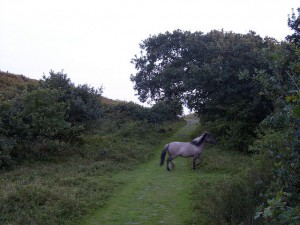 Wild horse passing by Inyucho on Flickr